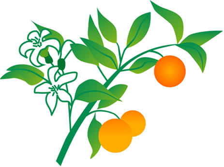oranger-vect